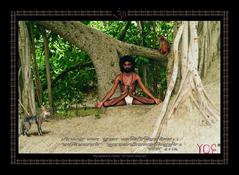 Yogi nelle Foresta